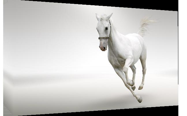 White running horse