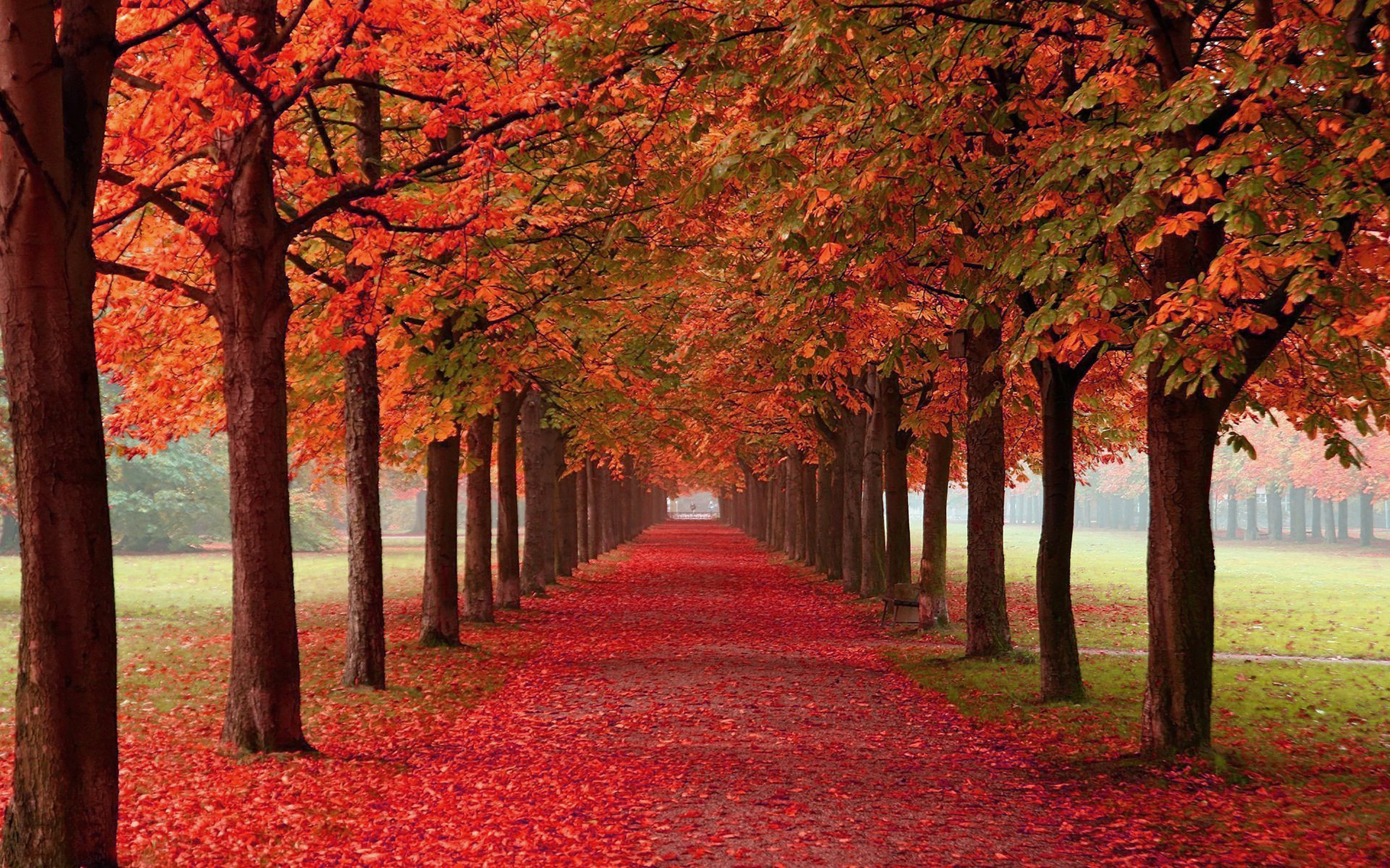 Pictures Of Autum: Autumn Trees Cotton Canvas Wall Art Picture Print- ALL