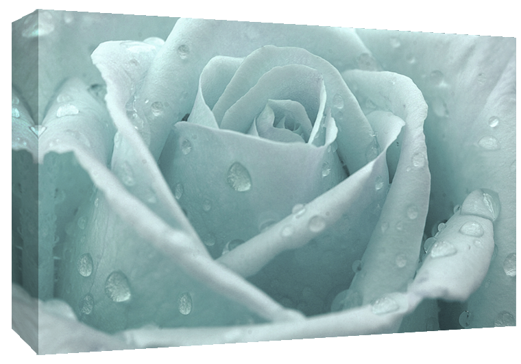 Duck Egg Blue Rose with Raindrops Canvas Wall Art Print 100% cotton ...