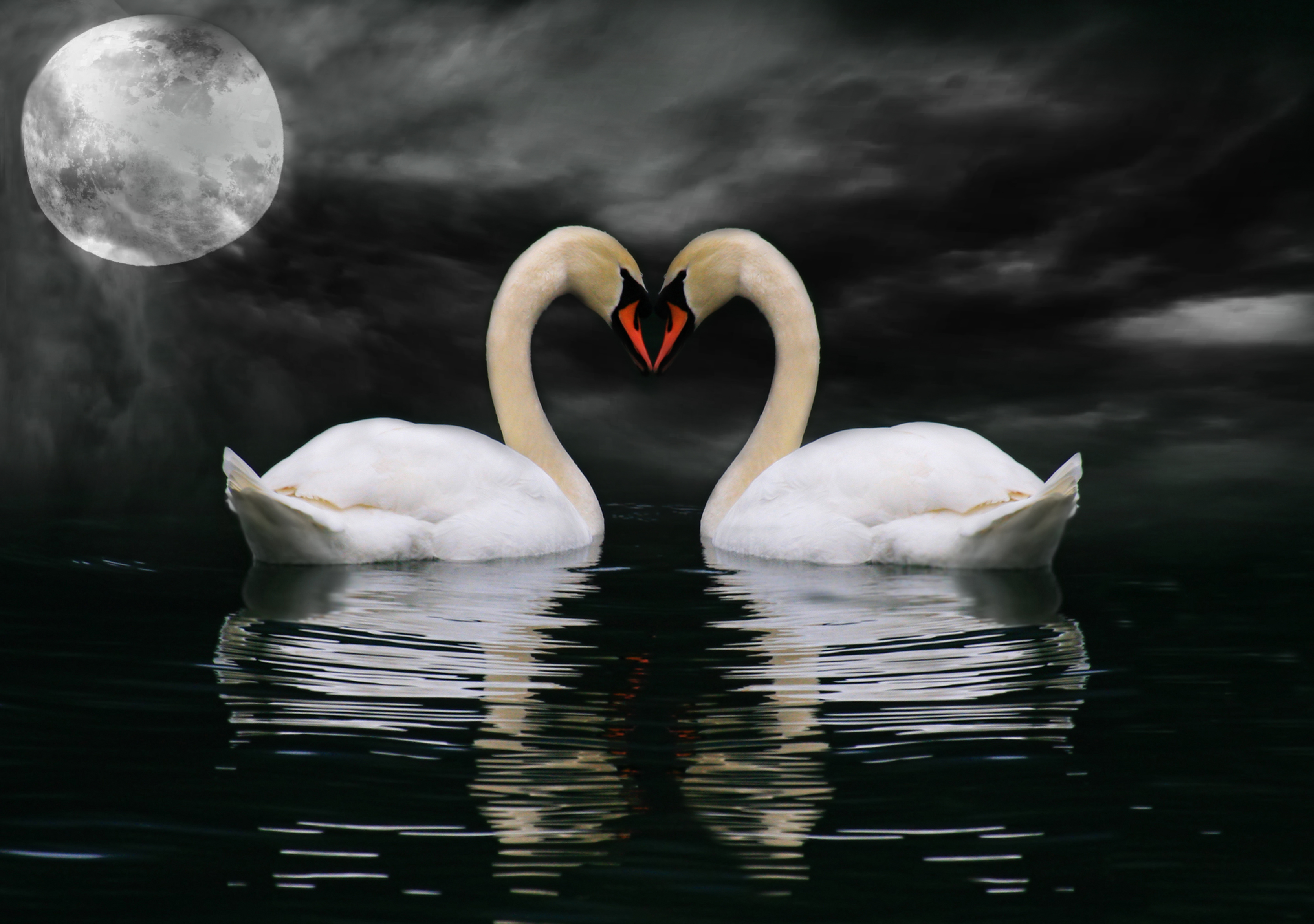 Swans By Moonlight >> Swans In Moonlight Animal Canvas Wall Art Picture Print Ebay