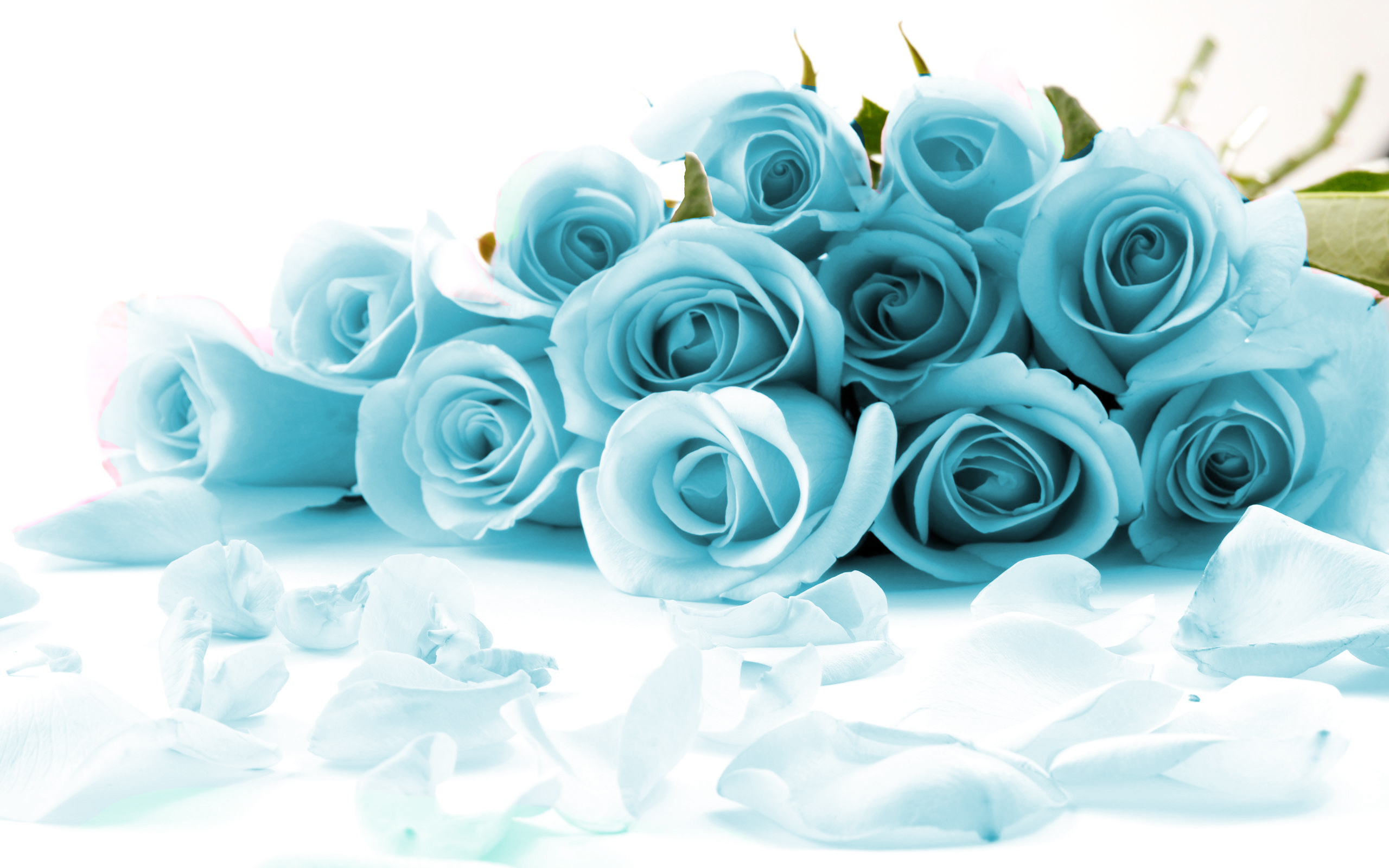 Duck egg blue roses canvas picture wall art print a2 20 x 14 ebay izmirmasajfo